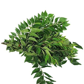 Picture of Fresh Curry Leaves
