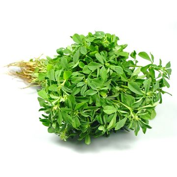 Picture of Fresh Methi Leaves (India)