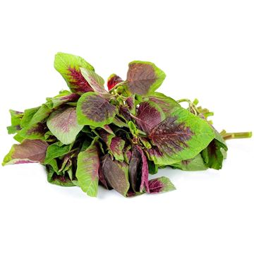 Picture of Red Green Spinach