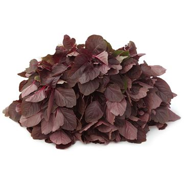 Picture of Red Spinach