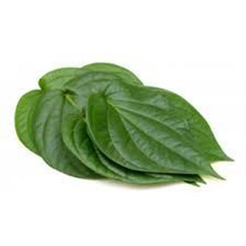 Picture of Betel Leaves