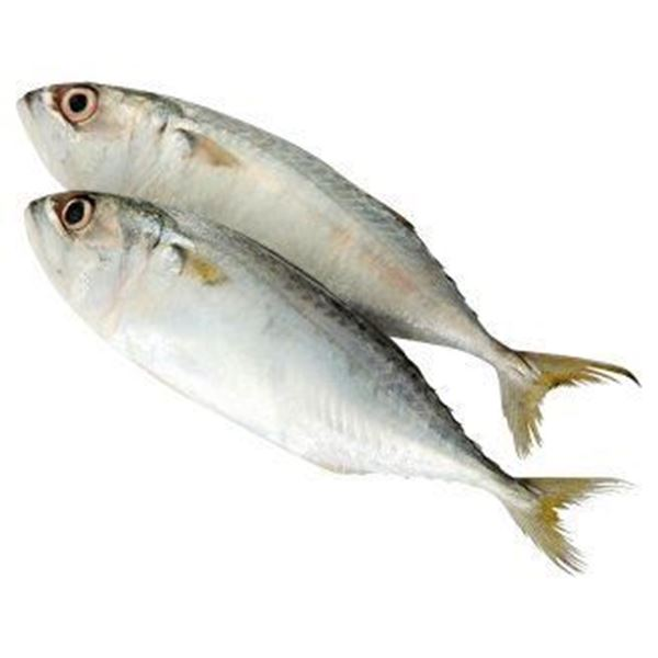 Picture of SURIA Indian Mackerel Fish (Chilled)