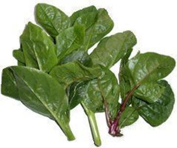 Picture of Vine Spinach