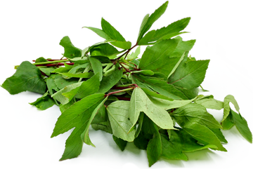 Picture of Gongura Leaves