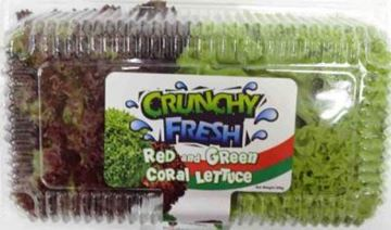 Picture of Coral Lettuce    Red & Green
