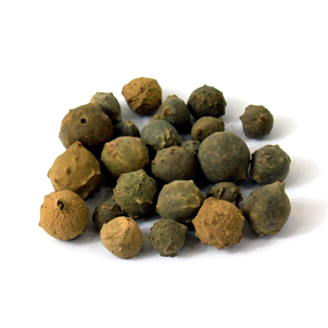 Picture of Haks Machakai (Nut Gall )