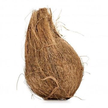 Picture of Fresh Whole Coconut (India) (No Exchange or Refund for this Product)