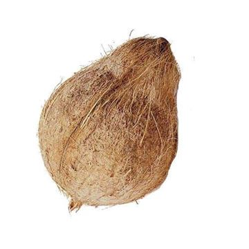Picture of Fresh Whole Coconut (Malaysia) (Best Consumed Within 3 Days From Delivery)