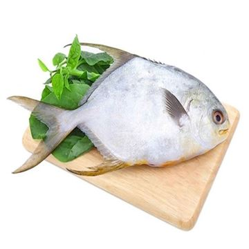Picture of Fresh Silver Pomfret  (NO EXCHANGE & NO RETURN For This Item)