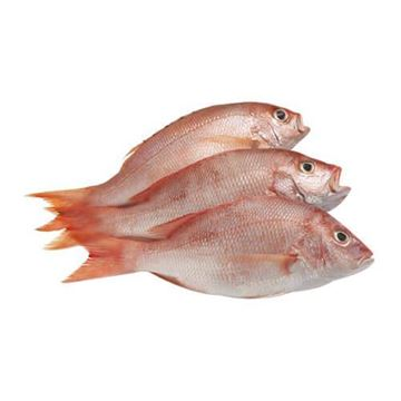 Picture of Fresh White Snapper  (NO EXCHANGE & NO RETURN For This Item)