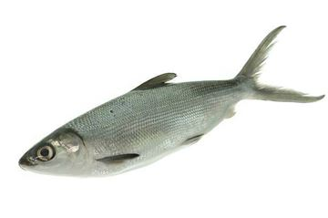 Picture of Fresh Milk Fish (NO EXCHANGE & NO RETURN For This Item)