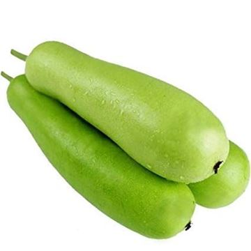 Picture of Fresh Indian Bottle Gourd (Dudhi)