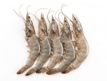 Picture of Fresh Vannamei Prawn  (NO EXCHANGE & NO RETURN For This Item)