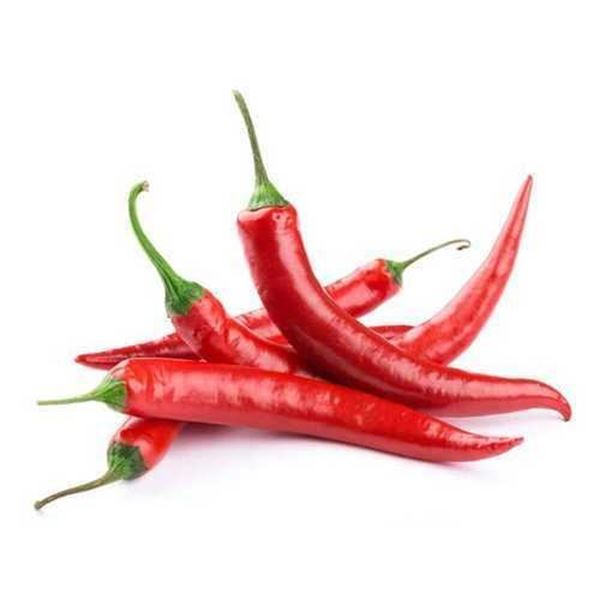 Picture of Fresh Big Red Chilli (Thailand)