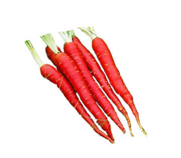 Picture of Fresh Red Carrot India (Desi Gajar)