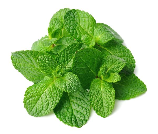 Picture of Fresh Mint Leaves