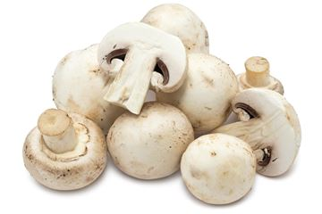 Picture of Fresh White Button Mushroom