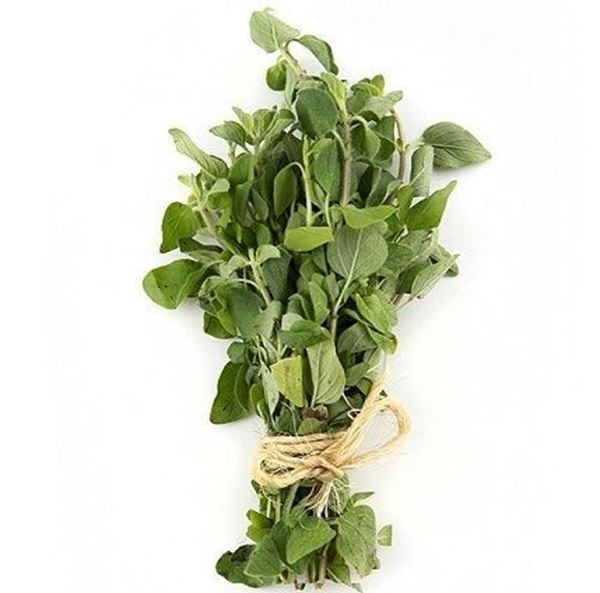 Picture of Fresh Herbs Oregano