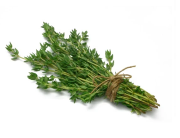 Picture of Fresh Herbs Thyme