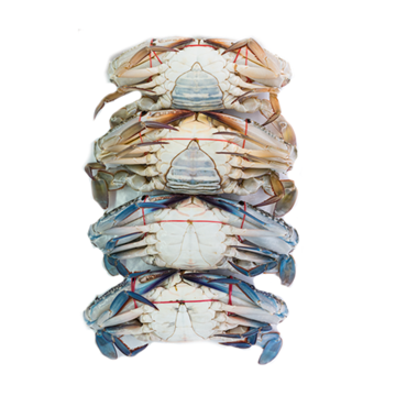 Picture of Fresh Flower Crabs (NO EXCHANGE & NO RETURN For This Item)