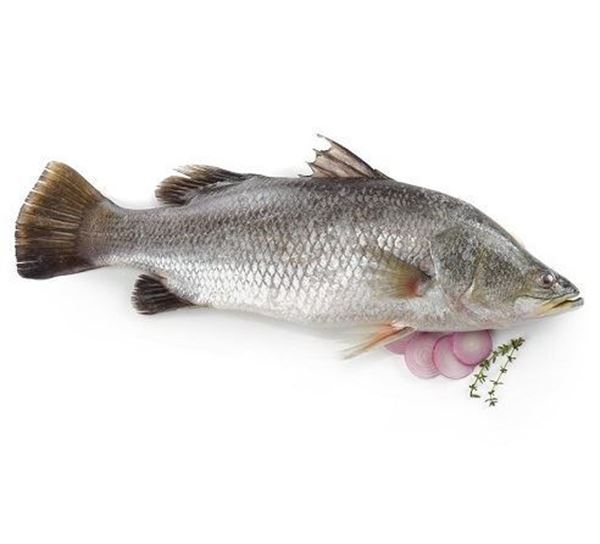 Picture of Fresh Seabass Whole Fish (NO EXCHANGE & NO RETURN For This Item)