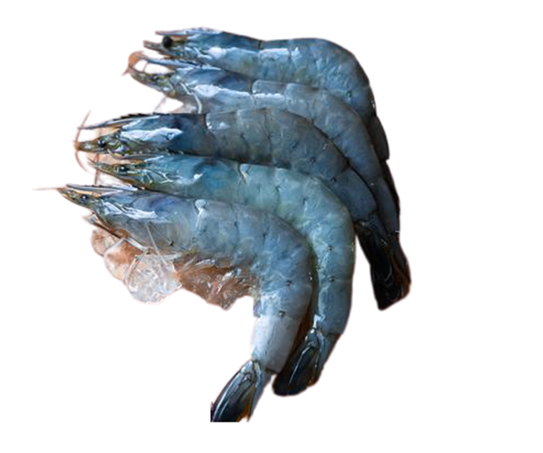 Picture of Fresh Grey Prawns (NO EXCHANGE & NO RETURN For This Item)